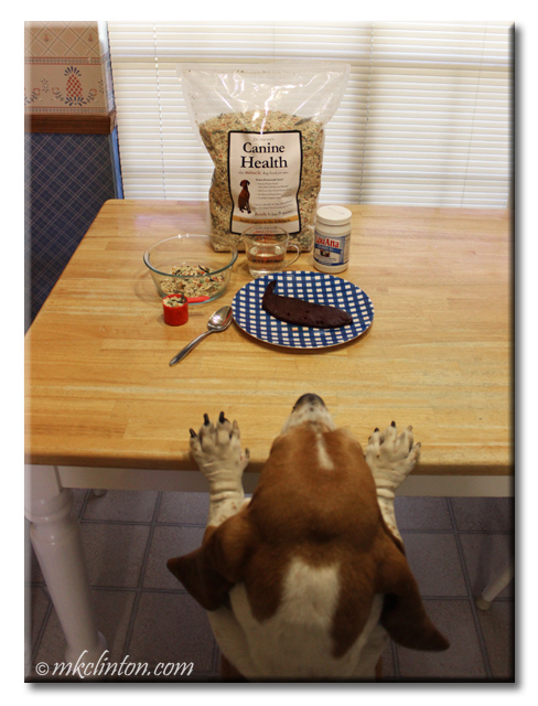 Basset Hound with paws on table looking at liver and Canine Health pre-mix
