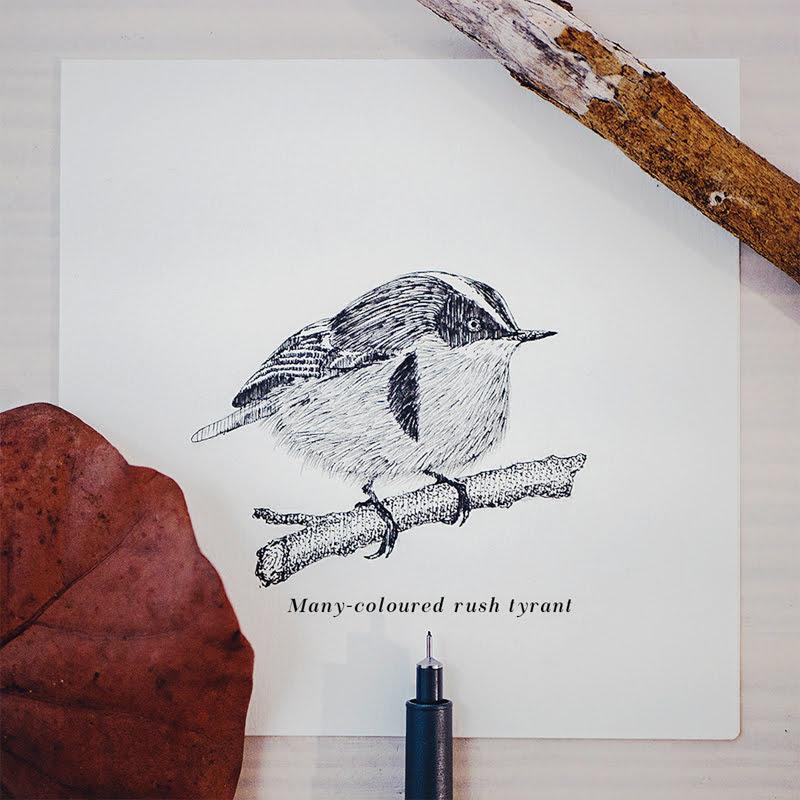 15 Beautiful Birds Illustrations by Daniel Merac.