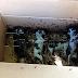 4 Si Comel Mati Kelaparan Dihurungi Semut
