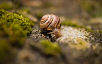 Wallpaper: Snail with house on the back
