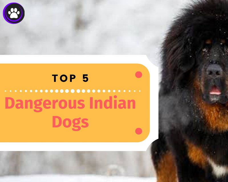 Top 5 most powerful and dangerous Indian dogs