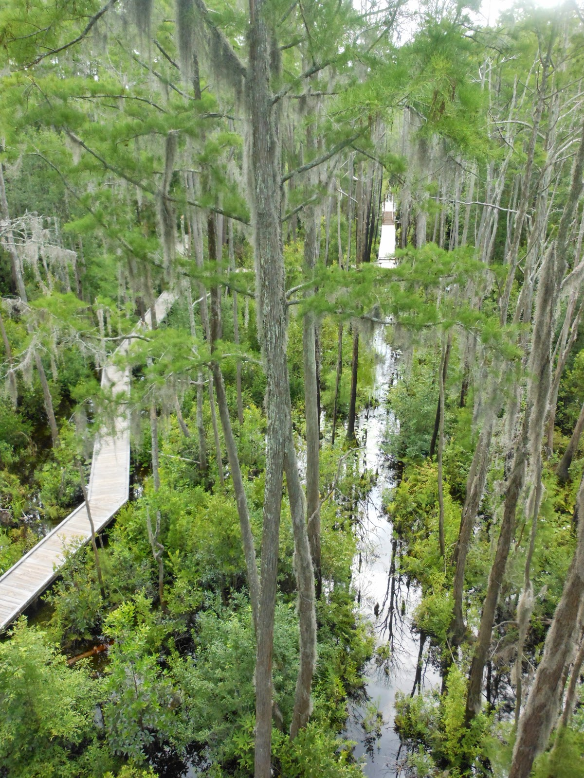 okefenokee swamp sample essay