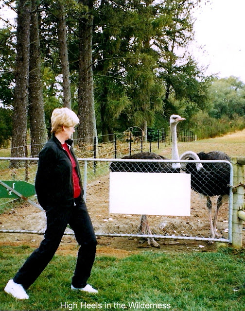 woman eyeing emus in a pen warily