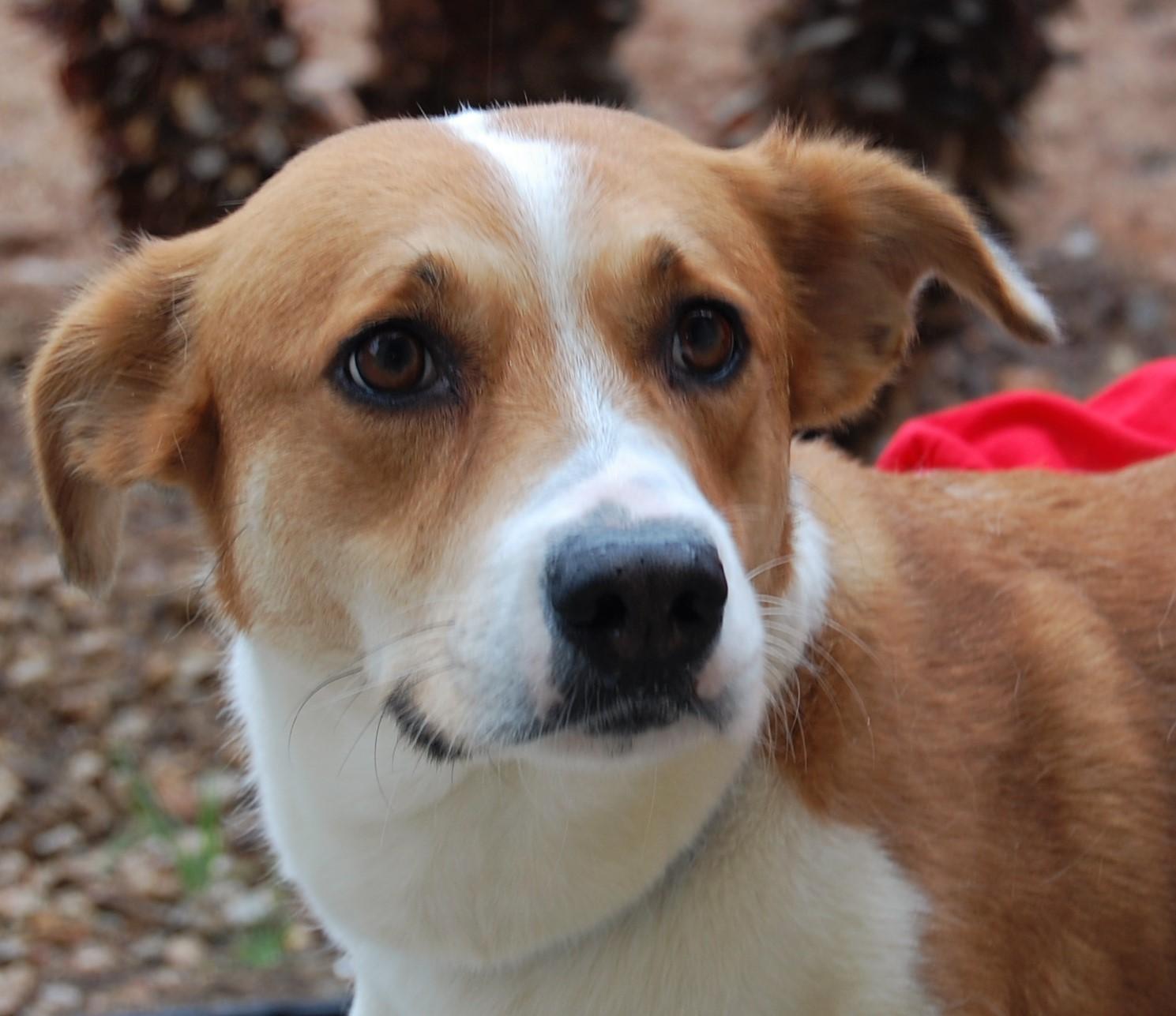 Nevada spca animal rescue abigail for Dog pound las vegas nevada