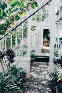Keep up a Lush Indoor Landscape with these Tips