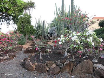 Kapi'olani Community College cactus garden