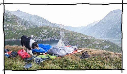 Wildcampen mit dem Hund