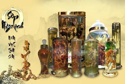 Dùng sâm ngọc linh ngâm rượu bảo quản và sử dụng rất tốt
