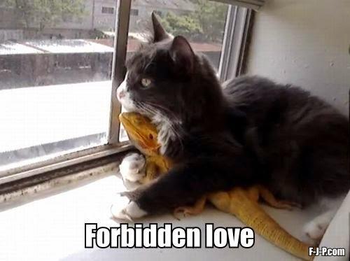 Funny Cat Lizard Forbidden Love Joke Picture