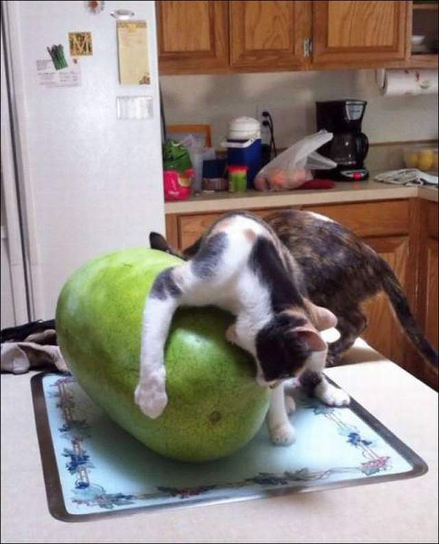 Funny cats - part 327, best funny cat picture, adorable cat images