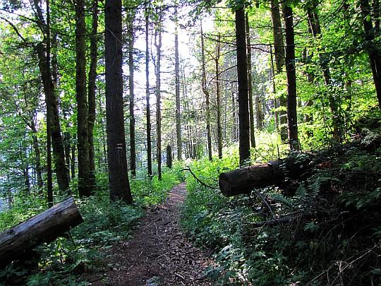 Odcinek leśny ponad Sokolią doliną.