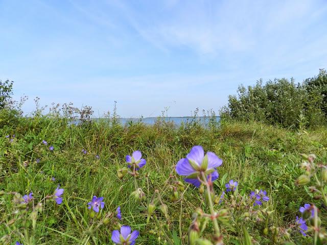Полевые цветы на фоне озера Малые Касли