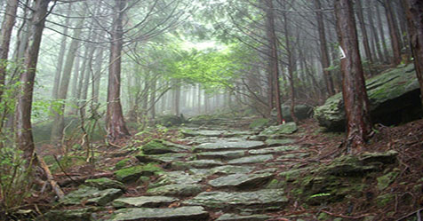 Aokigahara the Most Mysterious Suicide Forest in Japan