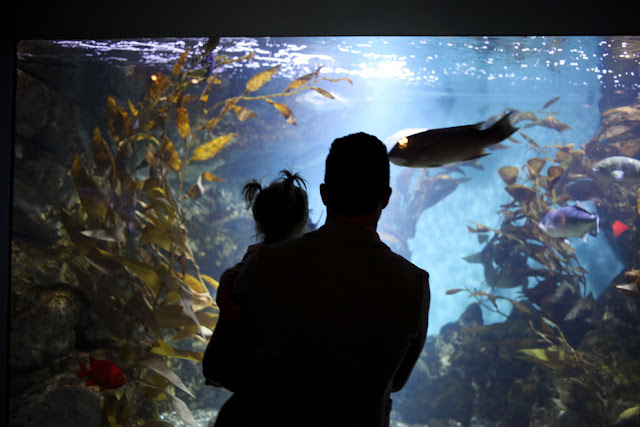 Father and daughter view an aquarium gallery in San Francisco