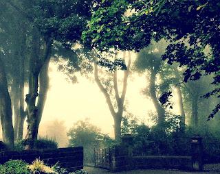 mist around trees