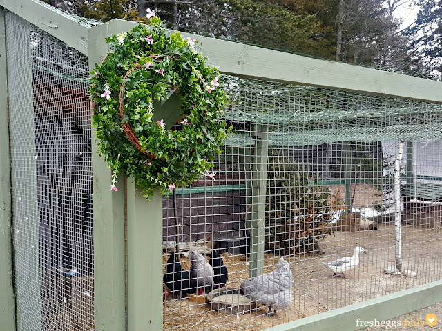 how to build a chicken run with a roof