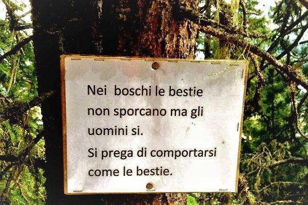 spesso Aforismario®: Bosco - Aforismi, frasi e proverbi WH15