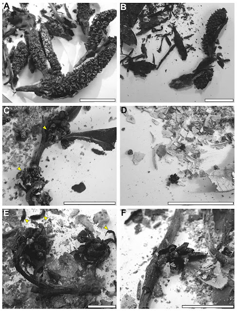 Charred flowers and the fossil record