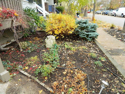 Coxwell-Danforth Toronto Fall Cleanup Front Yard After by Paul Jung Gardening Services--a Toronto Organic Gardening Company