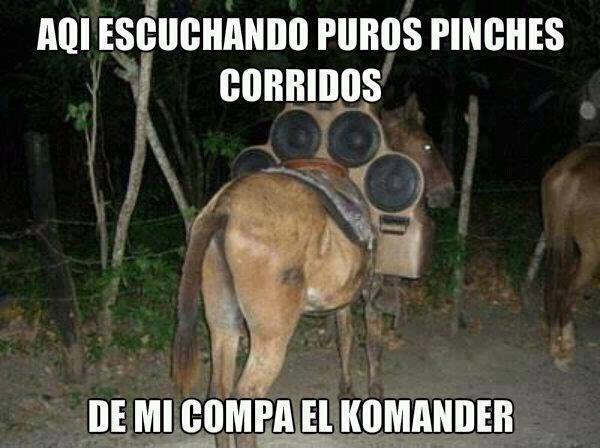 Imgenes De Caballos Con Frases Vaqueras Holidays Oo