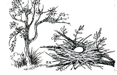 Paloma manchada Patagioenas maculosa