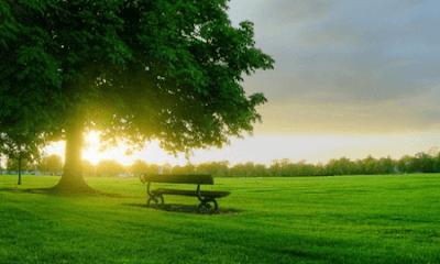 Kumpulan Puisi Lingkungan Tentang Peduli Alam | Puisi Kebersihan Lingkungan