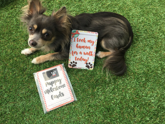 Hashtag Hipster Hounds Milestone Cards for dogs with a Chihuahua