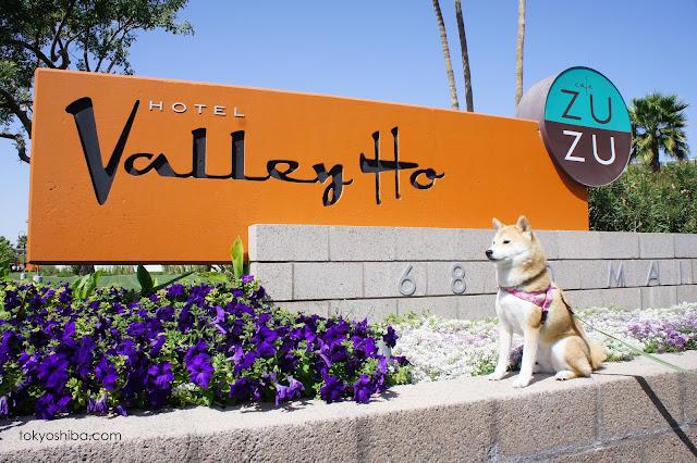 Pet Hotel Scottsdale Az