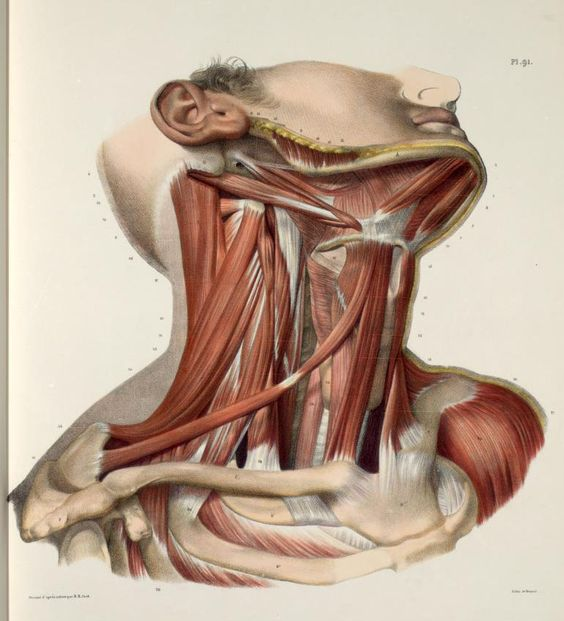 Ilustrarte10: Dibujo Cientifico. Anatomía humana