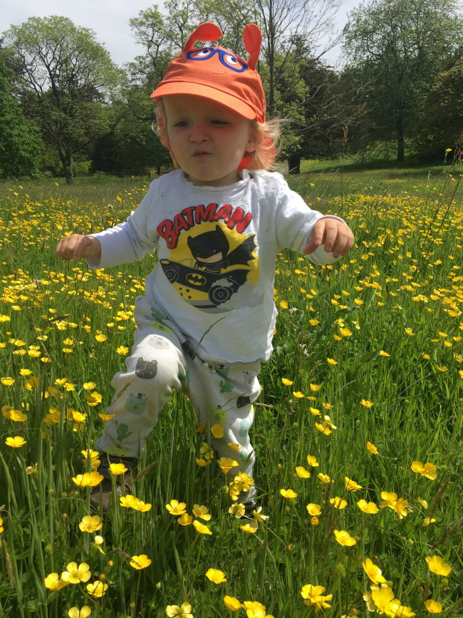 #MySundayPhoto-Number-23-is-a-toddler-in-a-field-full-of-buttercups