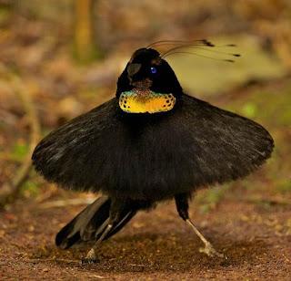 Tarian-Tarian Burung Yang Memukau