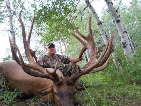 World record bull elk