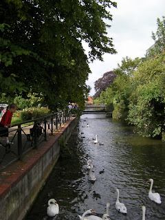 river running through salisbury with swans