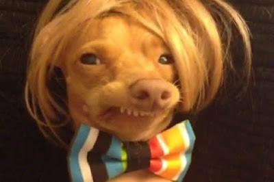 Este perrito no puede esconder sus dientes nunca y eso… ¡lo ha hecho famoso y feliz!