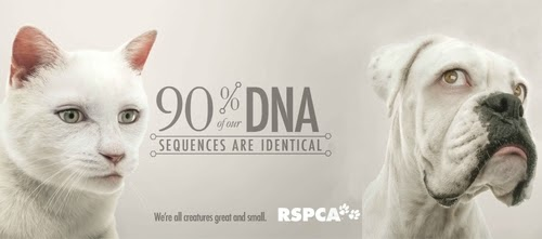 00-RSPCA-Human-Eyes-Animals-Advertising-Illustrations-www-designstack-co