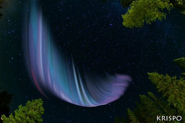 aurora boreal entre arboles