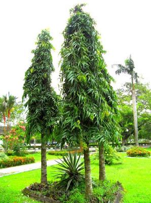 Jasa Tukang taman Surabaya Tanaman hias Glodokan tiang