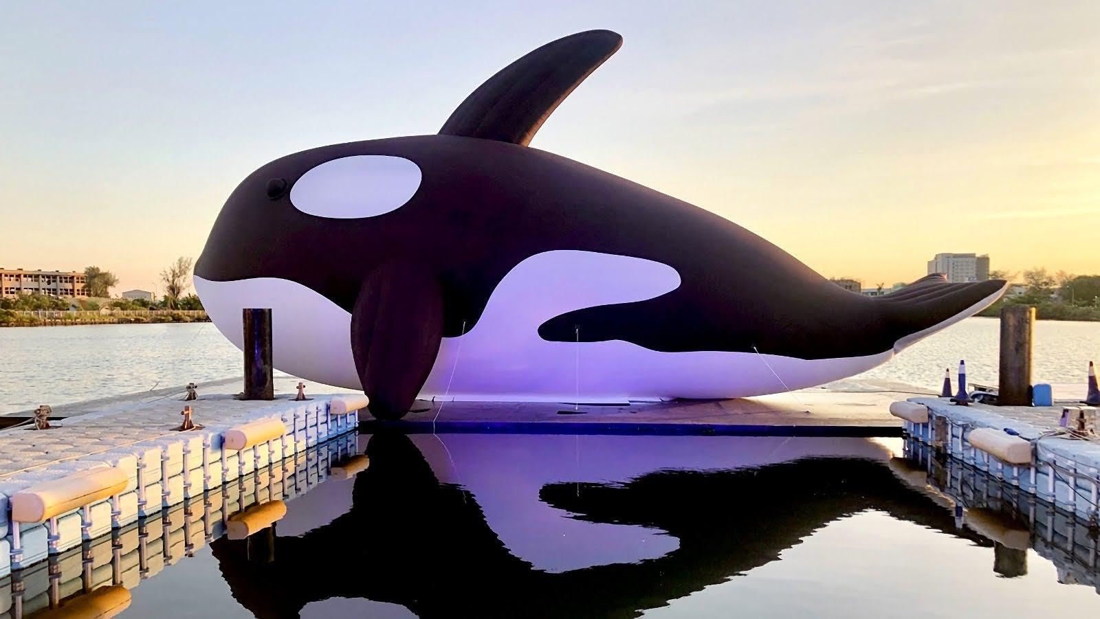 大魚歸隊7/25重新開放|安平鯨魚家族大集合:虎鯨Orca×大魚的祝福×鯨彩漁光