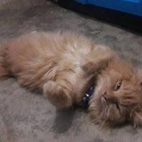 5 Fakta Unik Tentang Kucing Yang Belum Diketahui Banyak Orang.