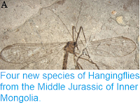 https://sciencythoughts.blogspot.com/2014/12/four-new-species-of-hangingflies-from.html