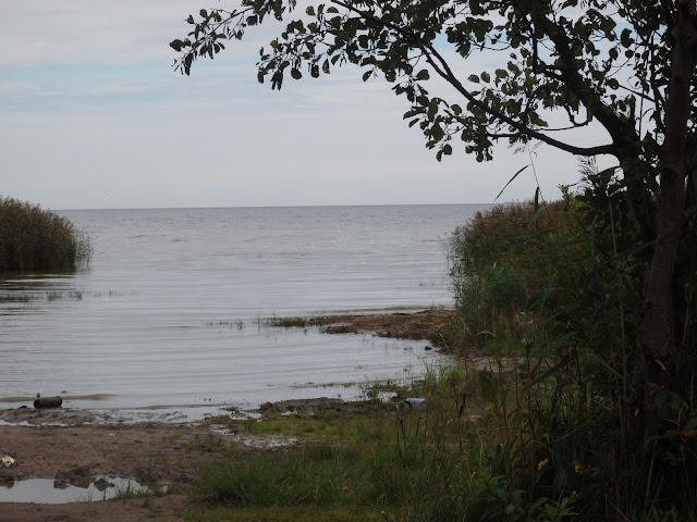 Jezioro Ładoga - dość zamulone i płytkie. Raczej nie polecam.