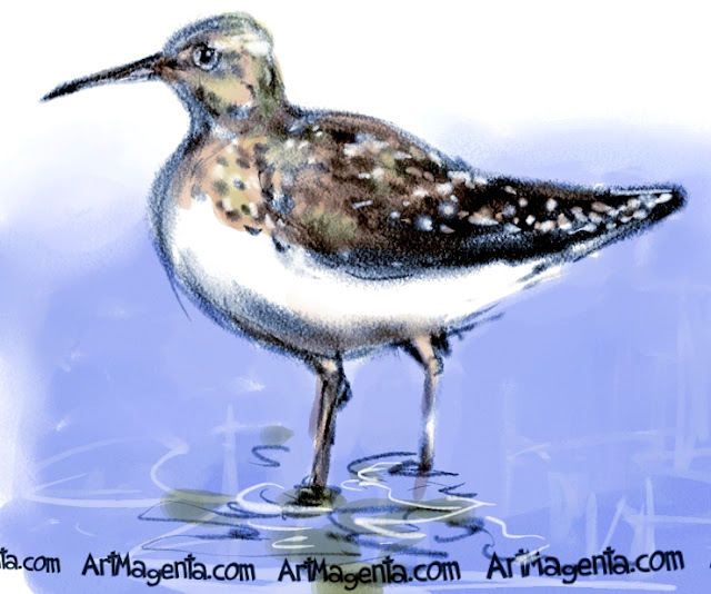 Green Sandpiper sketch painting. Bird art drawing by illustrator Artmagenta.