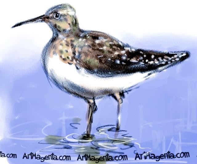 Green Sandpiper sketch painting. Bird art drawing by illustrator Artmagenta.