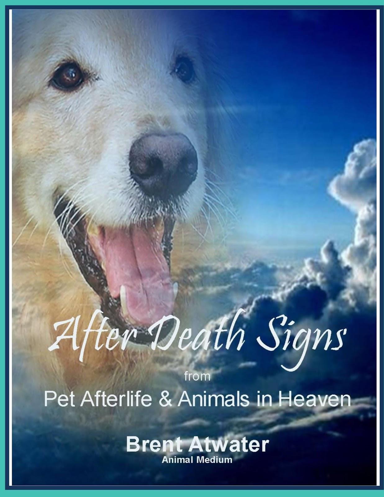 Movie About A Dog Reincarnation