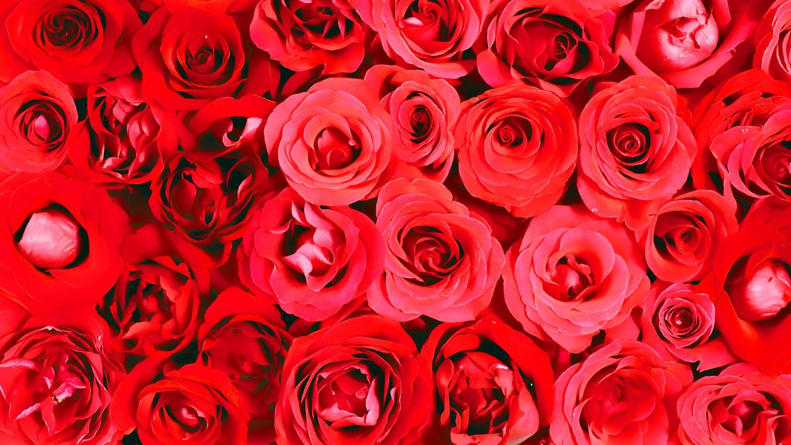 Fondos De Flores Rojas Tumblr Elegante Hintergrund