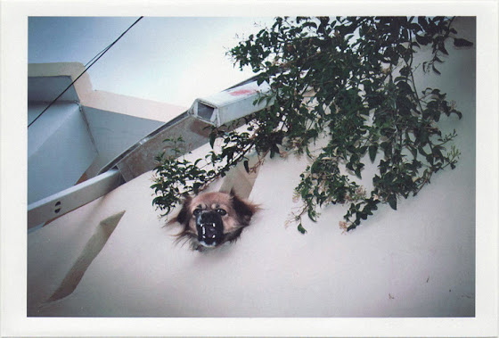 dirty photos - noah's ark fauna photo of dog's head in balcony in crete