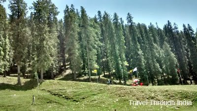 Greenery of Skiing Center, Narkanda