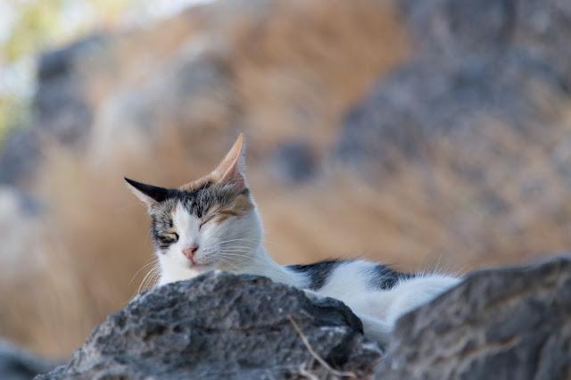 gatto lindos
