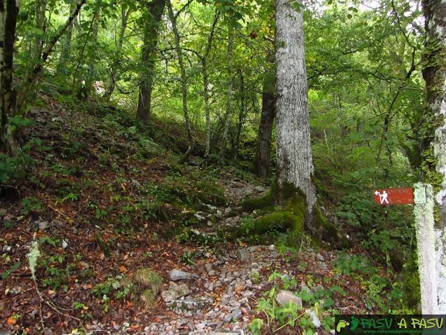 Adentrándonos en el bosque en Muniellos