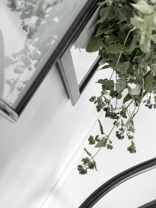 oregano, asetelmia, oreganon kukkia